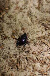 17) Bug's Life