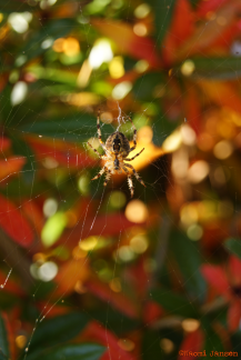 20) Spider in the morning