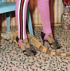 Gucci-pre-fall-2017-ad-campaing-the-impression-22