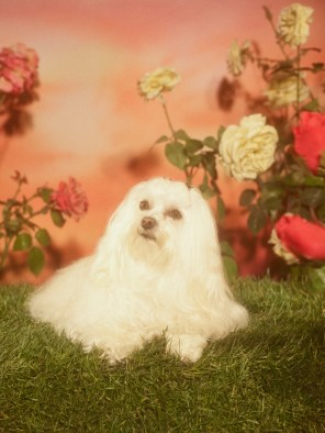 Gucci-year-of-the-dog-collection-the-impression-10