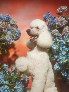 Gucci-year-of-the-dog-collection-the-impression-16