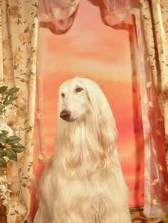 Gucci-year-of-the-dog-collection-the-impression-29