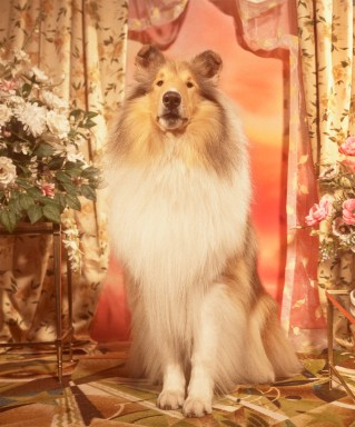 Gucci-year-of-the-dog-collection-the-impression-30