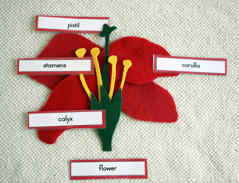 Parts of a Flower II
