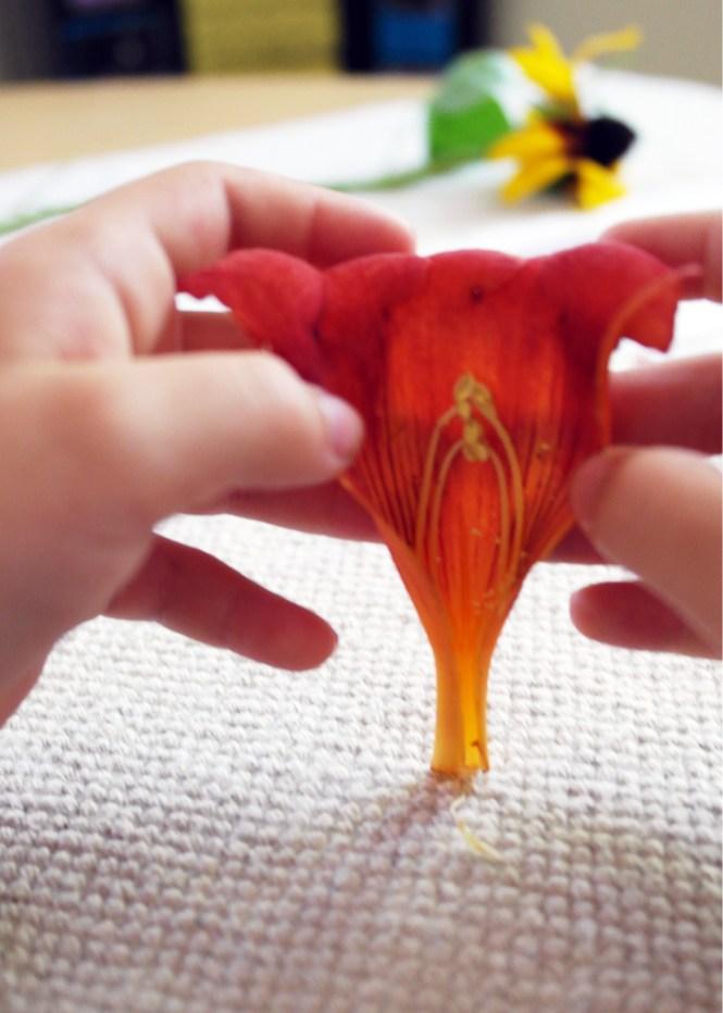 trumpet vine flower inside