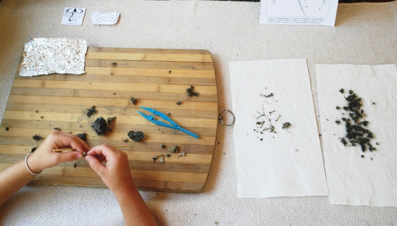 Owl Pellet Dissection I