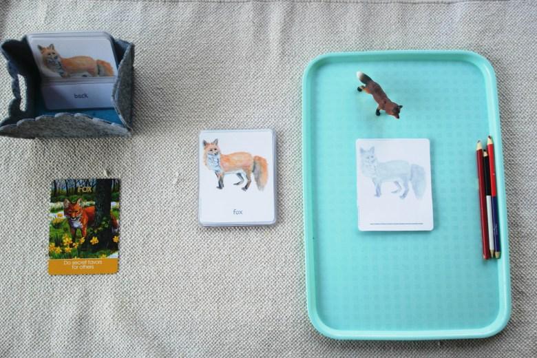 Parts of a Fox I – Nomenclature Cards