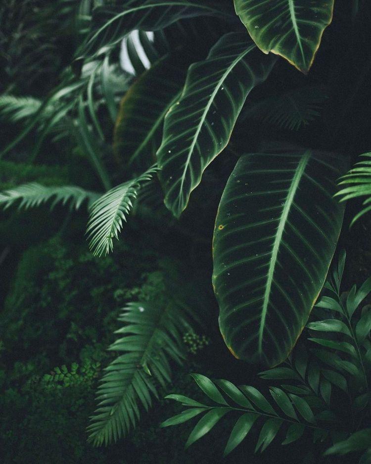 green dark leaves in the black background