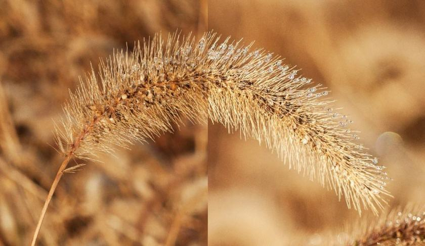 Depth of field, deep on left, shallow on right.
