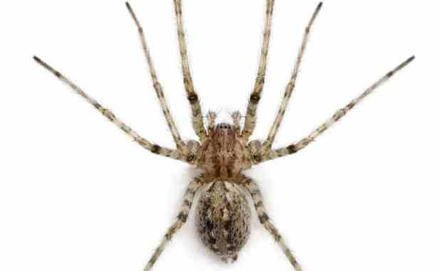 Man Fights for his Life after Bitten by Spider