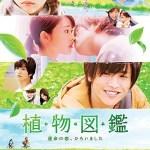 Evergreen Love