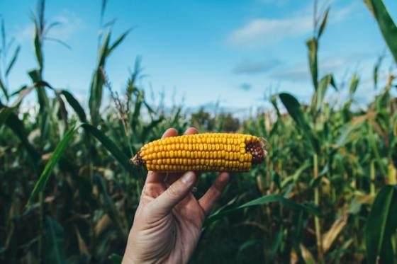 Leftover Corn Cob Photo by Jesse Gardner on Unsplash going the extra mile career