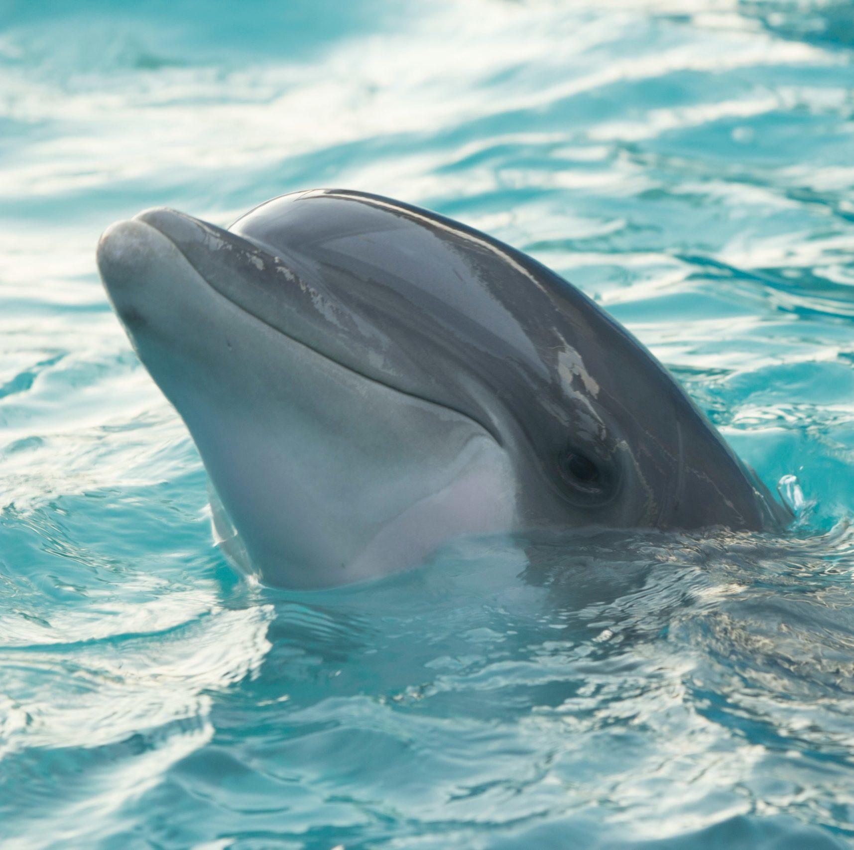 louan-garcia names personality dolphin delfina