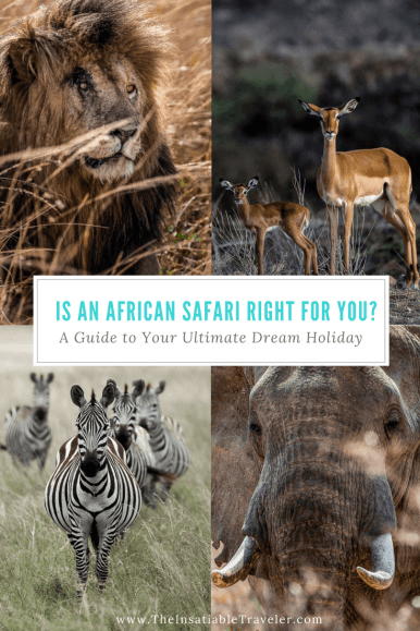 An African Safari is it Right for You- A Guide to an Ultimate Dream Holiday - Safar - African safari- Travel - Kenya - Botswana - Namibia - Tanzania - South Africa. (1)