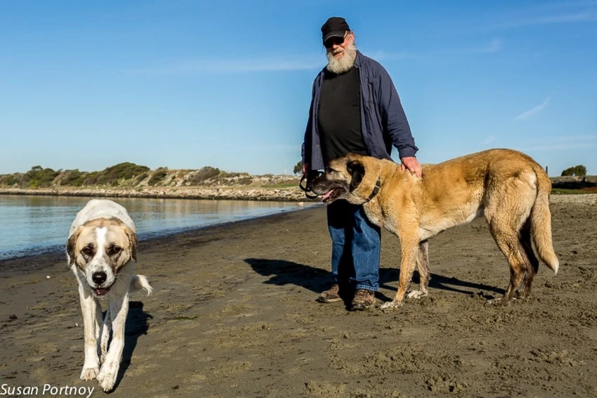 Exploring A New City? Here are 4 Reasons Why You Should Go To A Dog Park