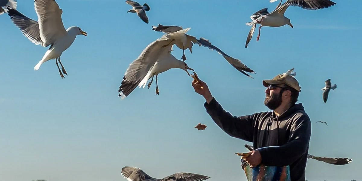man-feeding-seagulls-in-berkeley-california-020801