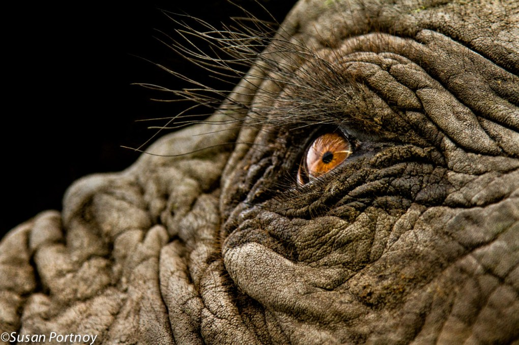 34 Photos For Elephant Lovers