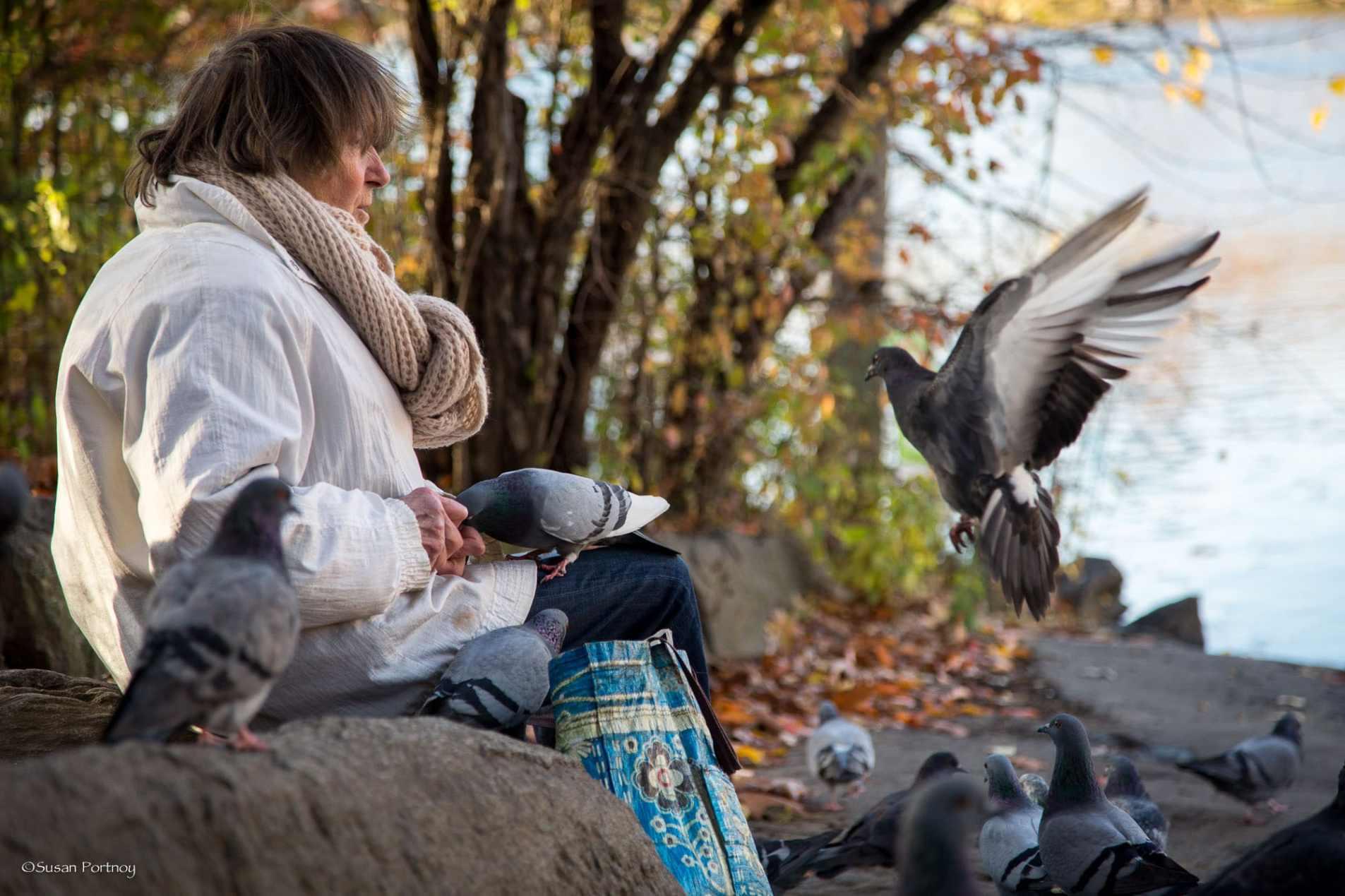 Lillian Bobo feeds pigeons in Central Park