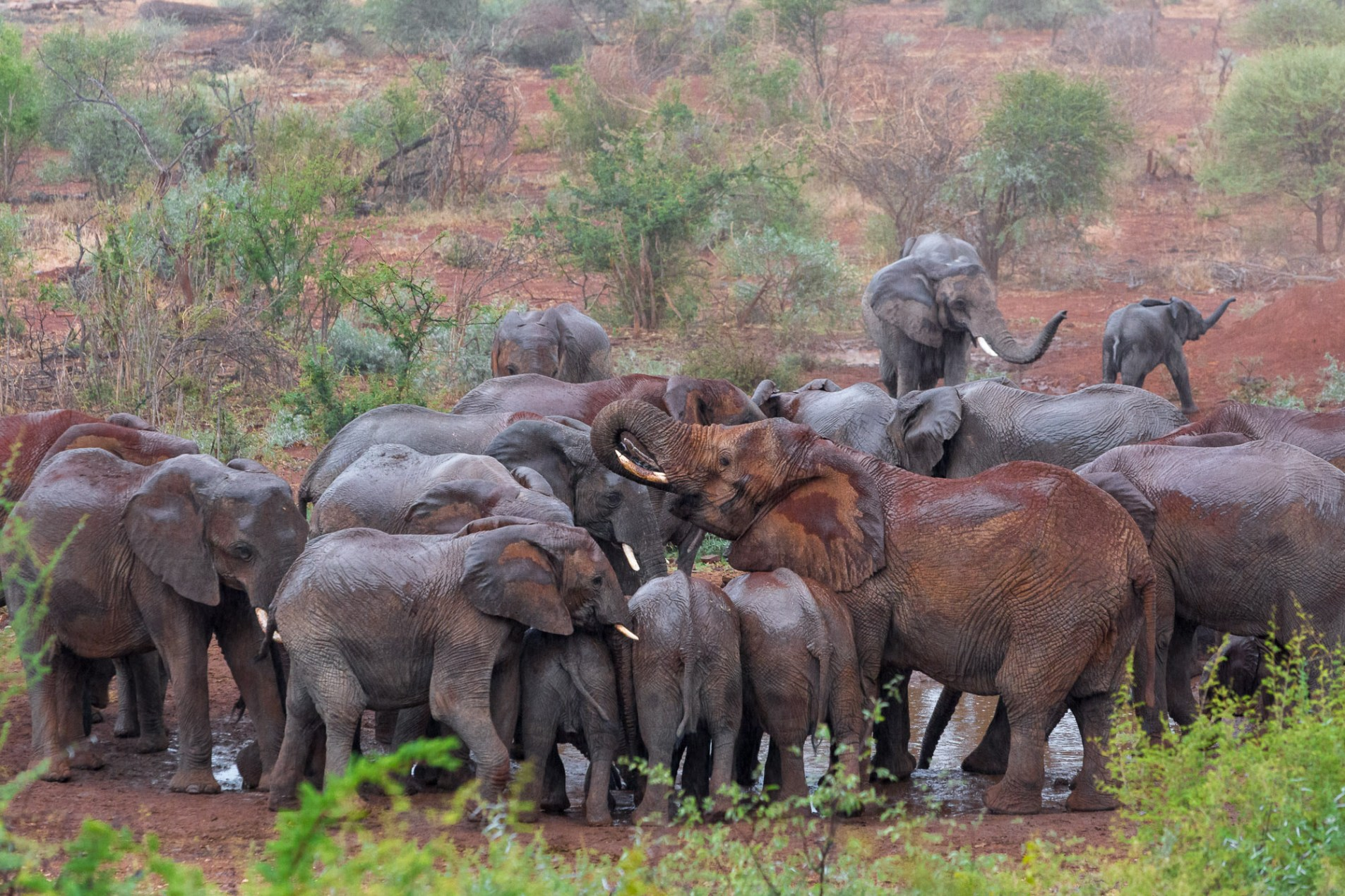 Elephants around the watering hole at Molori Safari Lodge in South Africa