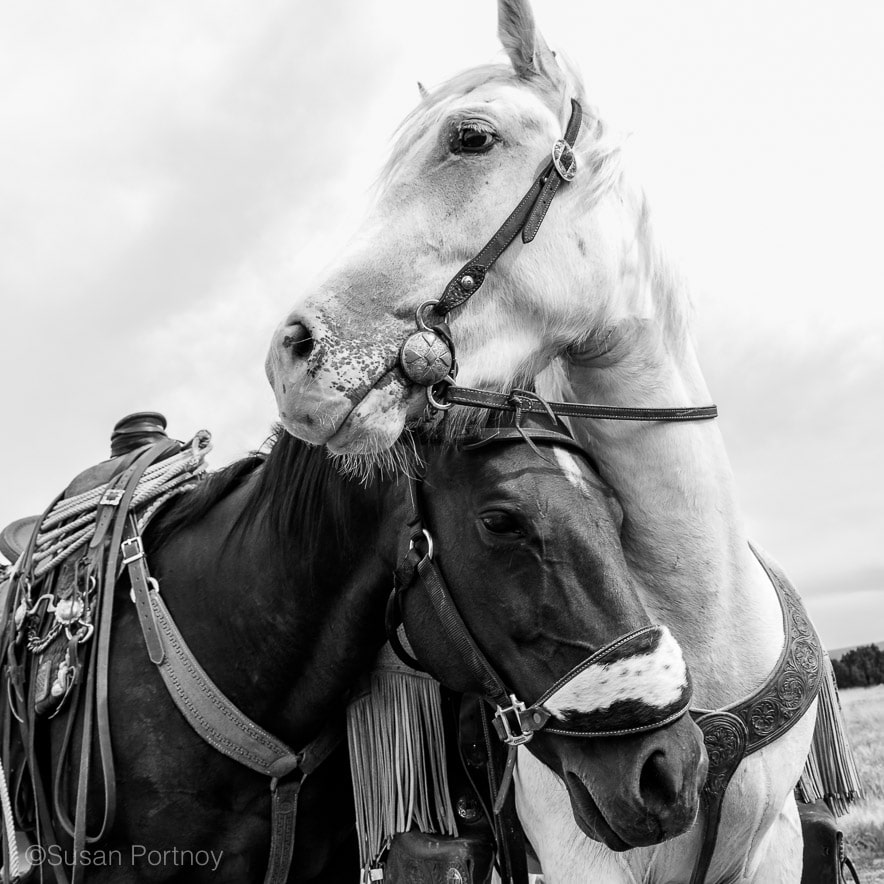 Two horses cuddle in Santa Fe, New Mexico