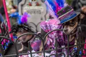 Doggie Halloween in Tompkins Square Park