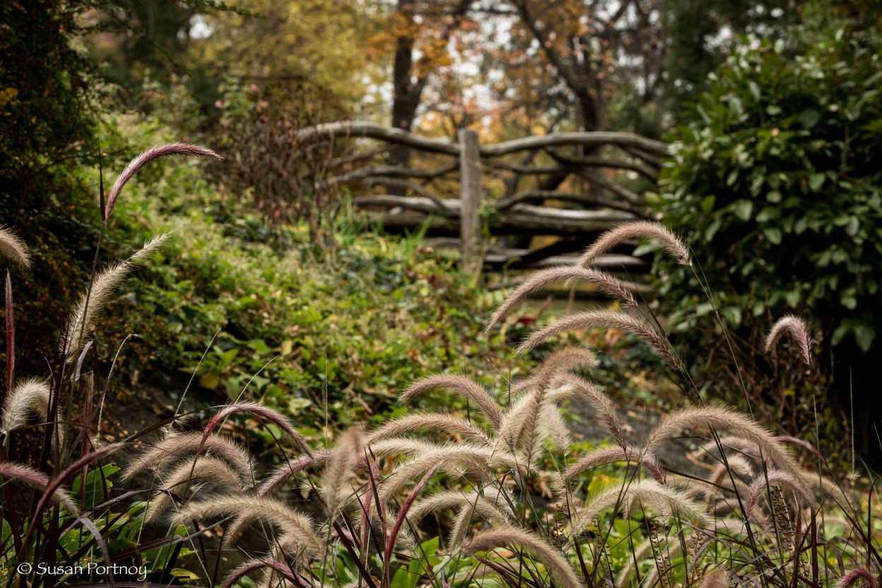 Wooden Bridge in Shakespeare's Garden, The Reservoir, Dipway Arch, Wollman Rink, Wood duck and mallard in Mallard in Mallard ducks in the Pond in Gapstow Bridge, Central Park, New York