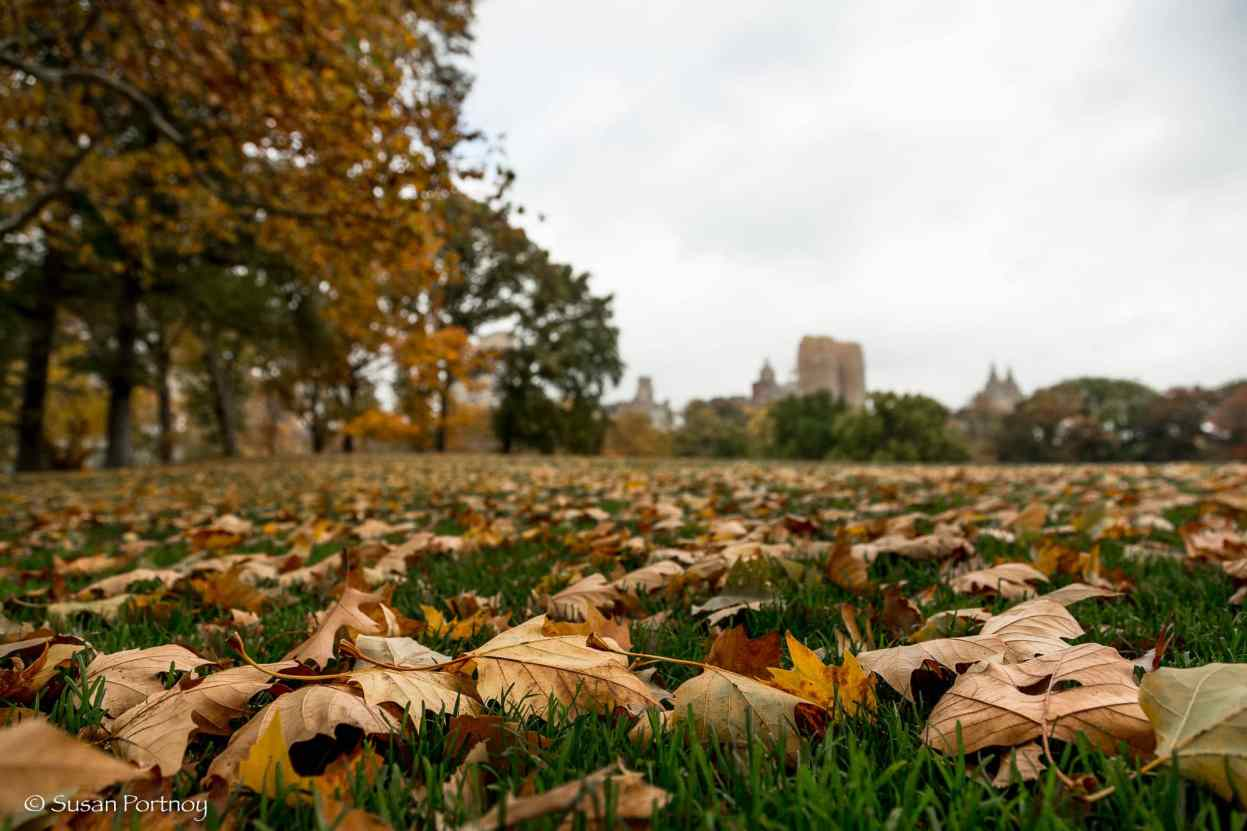 Close up of the leaves in the Sheep's Meadow, Central Park, New York