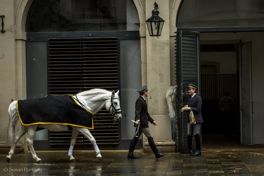 A man leading a horse at the Spanish Riding School