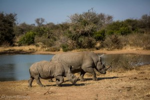 Rhino mother and calf in South Africa, WorldRhinoDay-7059