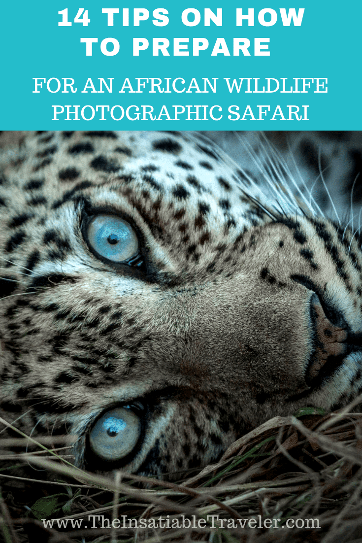 Everything you need to know to prepare for an African Wildlife Photographic Safari.