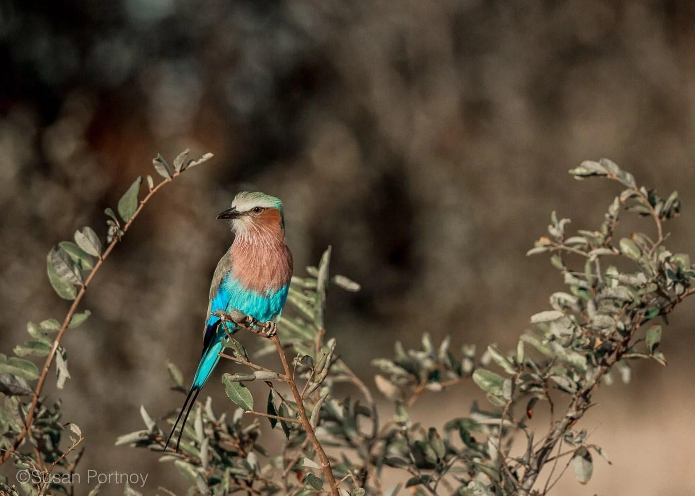 sportnoy_birds-02