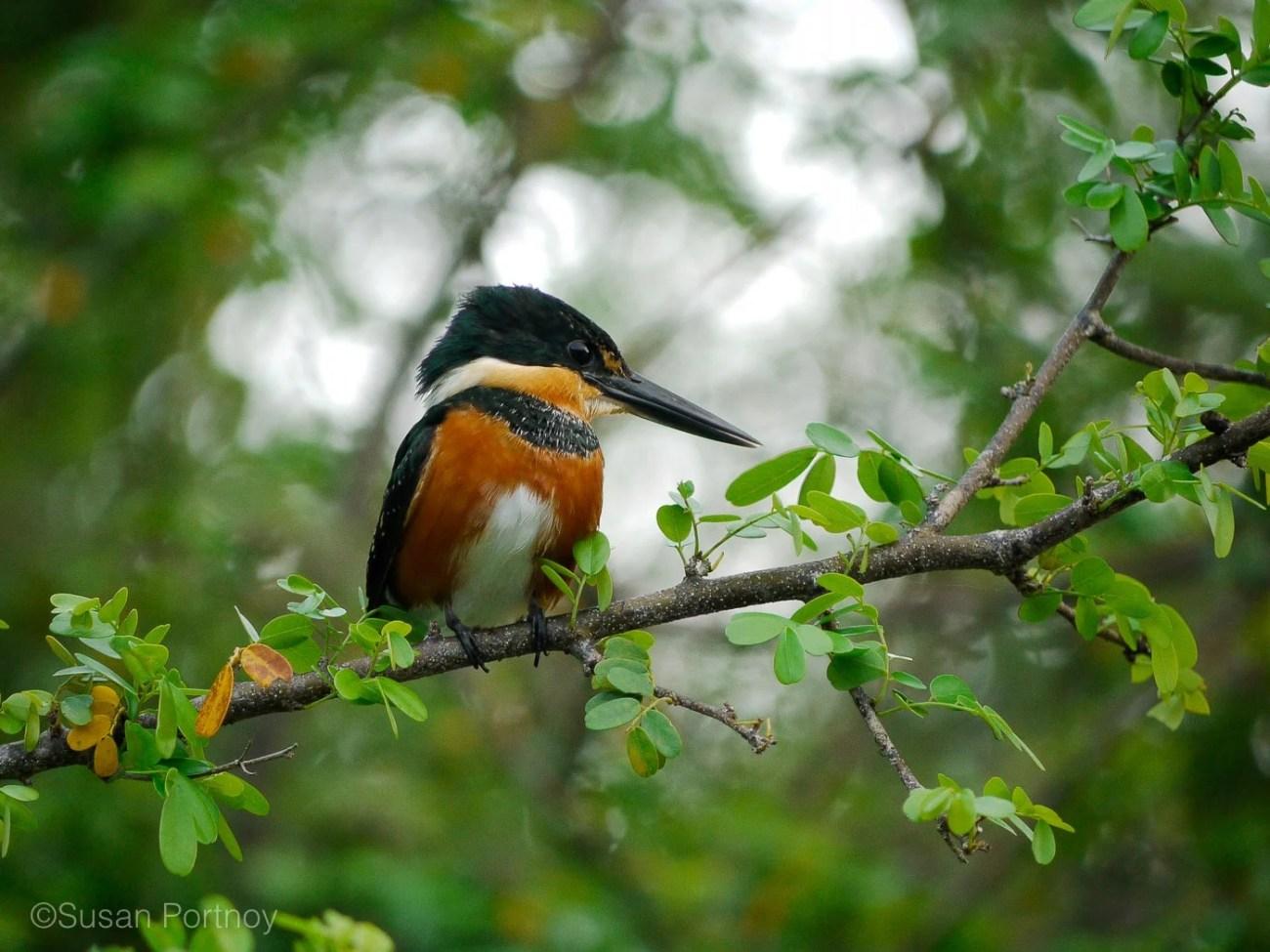 sportnoy_birds-04