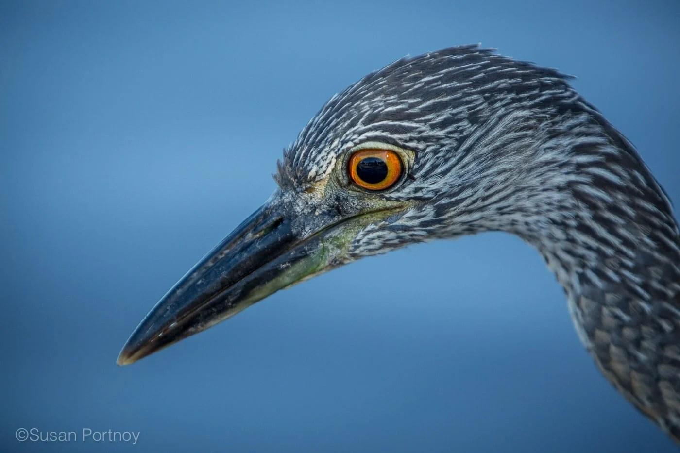 sportnoy_birds-13