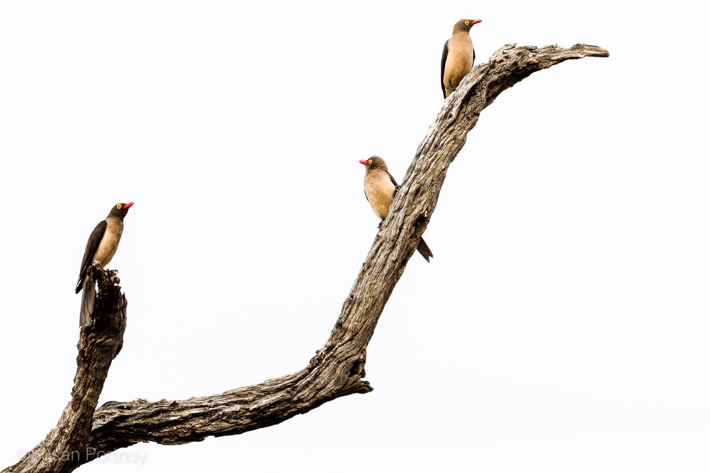 sportnoy_birds-21