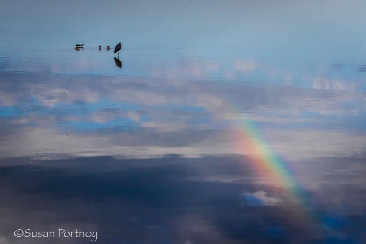 silhouette of birds and rainbow ding-darling-national wildlife-refuge-on-sanibel-island-florida
