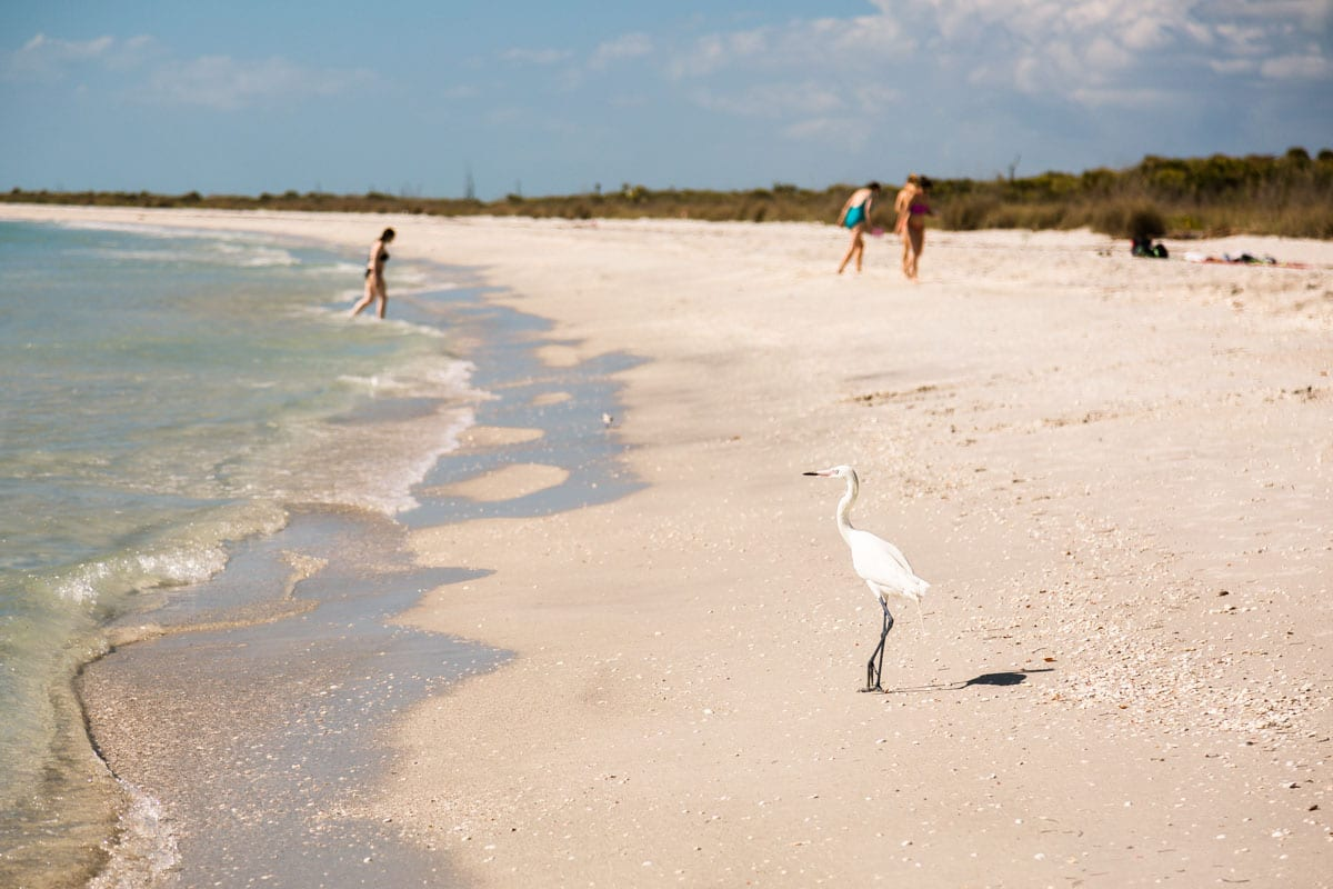 Egret on the beach with swimmers in the background