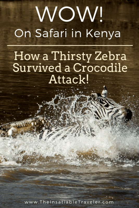 On Safari in Kenya: How a Thirsty Zebra Survived a Crocodile Attack!