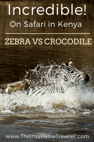 The story of a hot day, thirsty zebra, and the hungry crocodile that wanted some lunch (1)