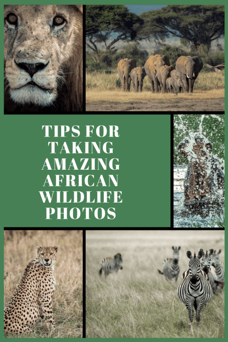 If you plan ahead, than you can focus in the moment and capture some amazing wildlife photos. Here are some tips for what to do before and after you get to the bush.