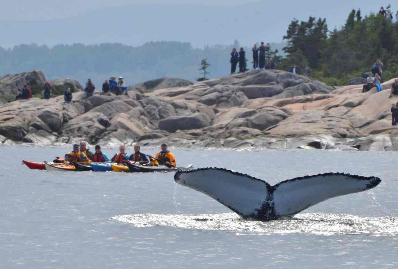 Whale watching by sea kayak and from the shore in Tadoussac  © Le Québec maritime / Marc Loiselle/Tourisme Côte-Nord – Manicouagan Region(s): Manicouagan