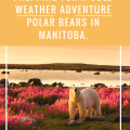Prepping for a Cold Weather Adventure: Polar Bears in Manitoba. What to wear; Camera gear and care; packing tips! Photo: Mike Poliza