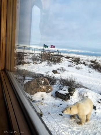 Canada's Walking Polar Bear Photo Safari - Seal_River_Manitoba-IMG_43162017111519