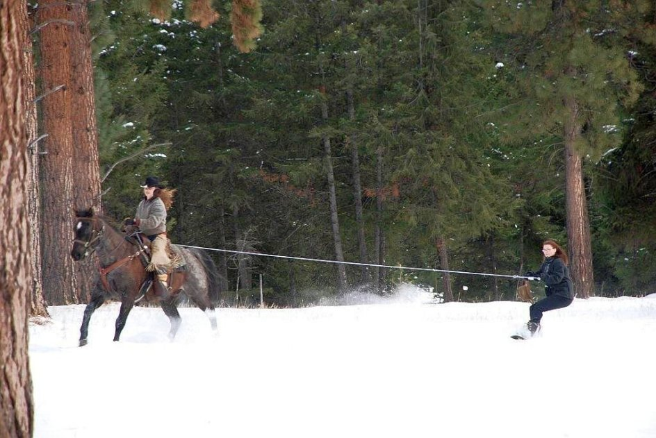Skijoring | | 8 Amazing Things to do in Winter Worth Traveling the World For