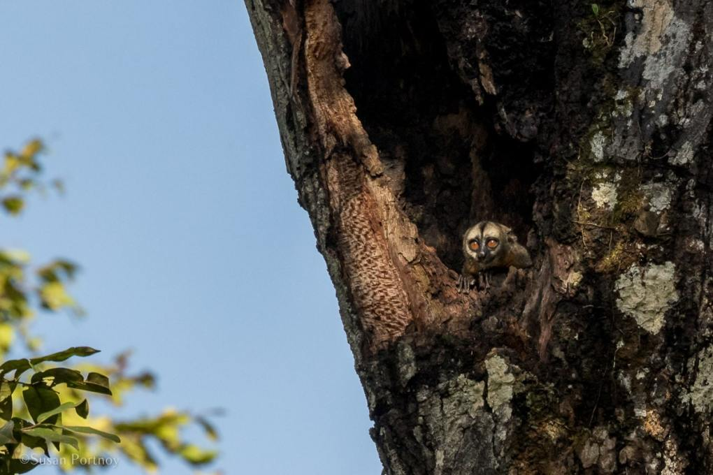 An adorable Owl Monkey | Amazon River Cruise Peru -International Expeditions-08