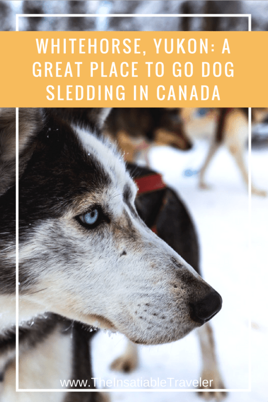 If you're in the #Yukon in the winter, than dog sledding should be on your itinerary ---_ One of The Best Places to Go Dog Sledding in Canada_ Whitehorse, Yukon #Canada. #Travel #Traveltip #Yukon #Dogsledding #Mushing