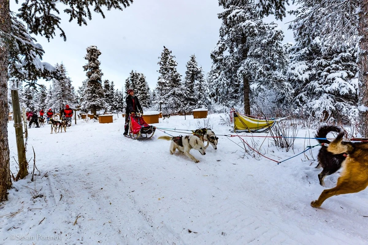 Whitehorse, Yukon: A Great Place to go Dog Sledding in Canada
