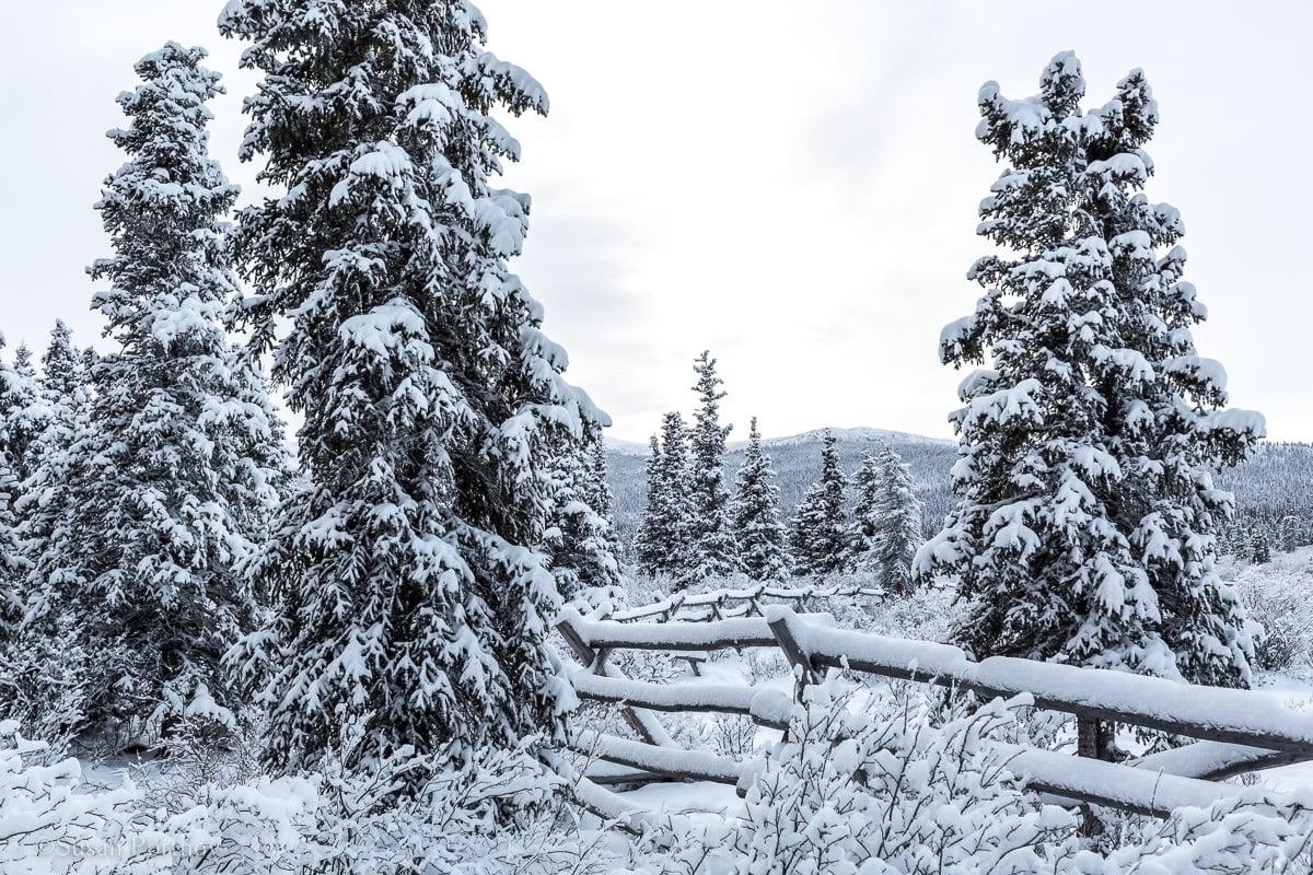 Winter wonderland at Sky High Ranch in Whitehorse, Yukon