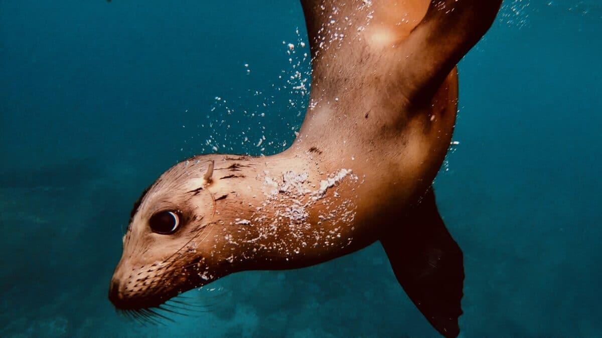 Baby Sea Lions on Los Islotes near Isla Espiritu Santos? You Should