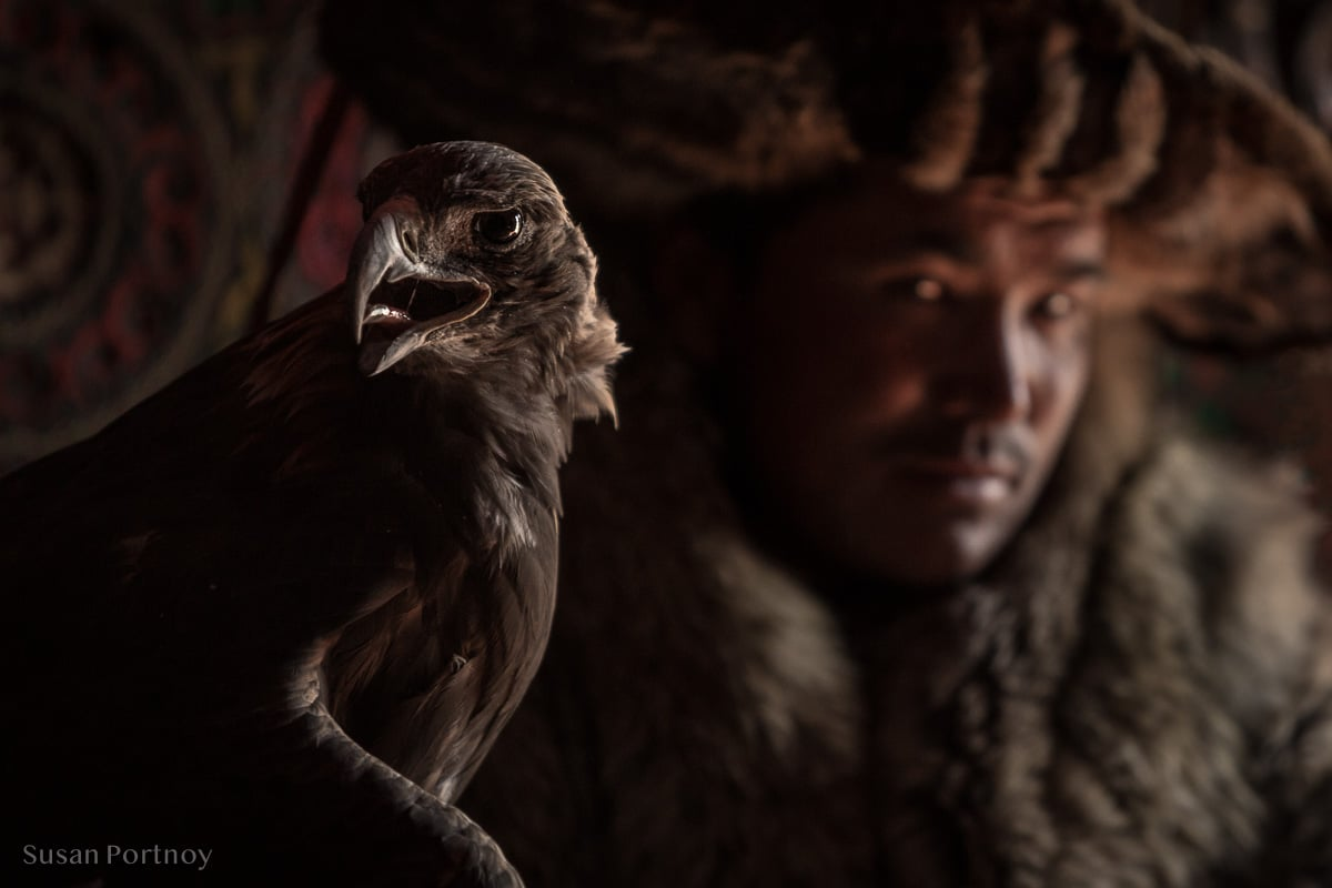 Close up of golden eagle with eagle hunter out of focus behind it wearing traditional winter fur coat and hat, Altai Mountains, Mongolia