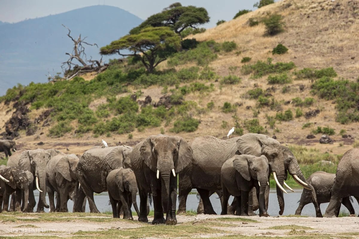 Elephant herd next to a watering hole -